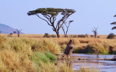 Come prepararsi a un safari in Tanzania