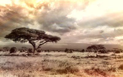 Alcuni consigli per un safari in Africa