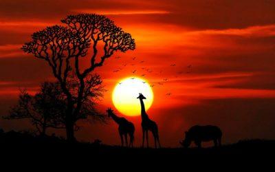 Le mete più gettonate per un safari in Tanzania