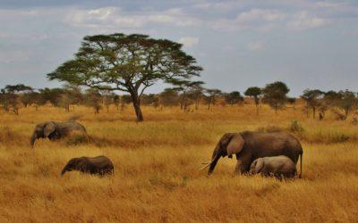 Abbigliamento per Safari
