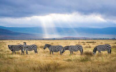 Safari in Tanzania: alla scoperta degli animali della savana