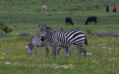 Riserva naturale di Ngorongoro: la guida di viaggio