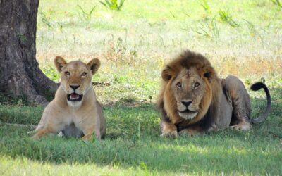 Guida al Parco Nazionale del Serengeti