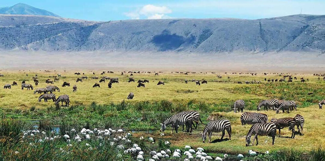 10 cosesorprendenti sul cratere di Ngorongoro
