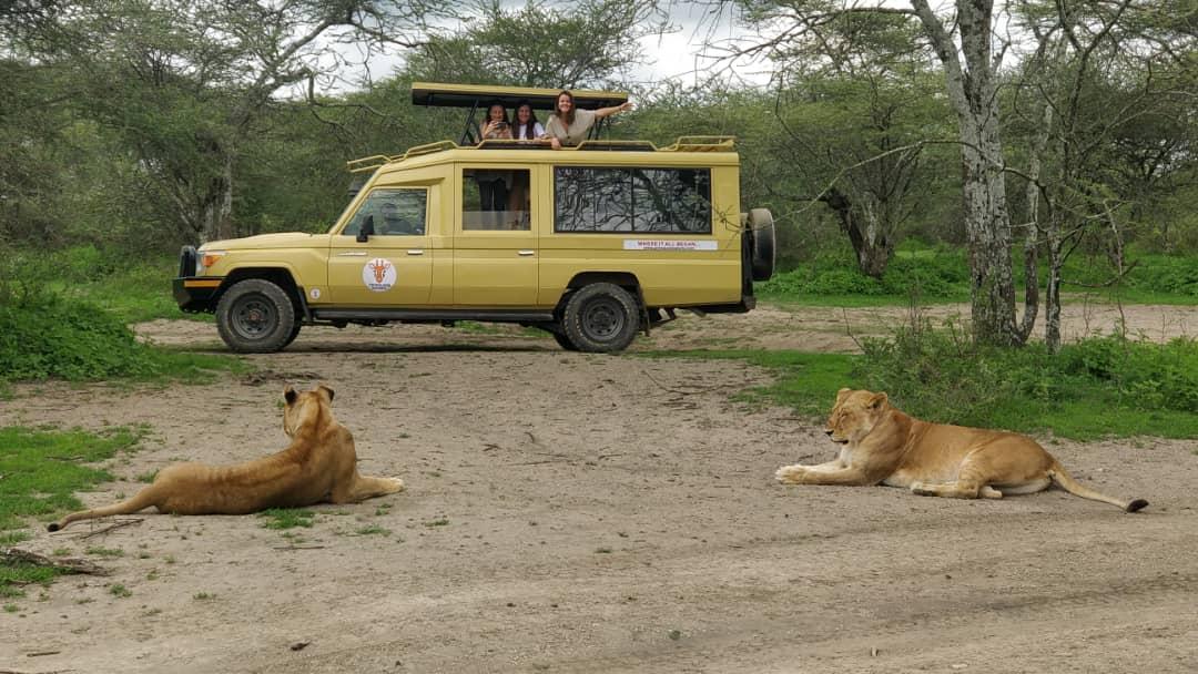 Cosa aspettarsi da un Safari in Tanzania
