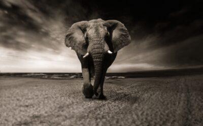 Il fascino di un safari in Africa