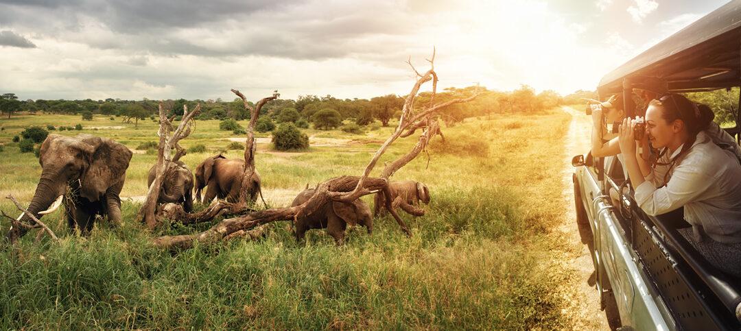 Perché la Tanzania è la migliore destinazione per i safari in Africa?