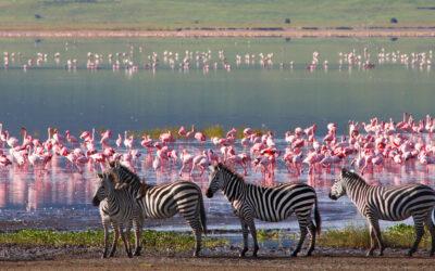 Come organizzare un safari in Tanzania: tutto ciò che c'è da sapere