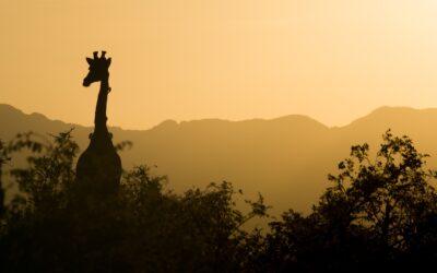 Guida tecnica alla preparazione di un safari