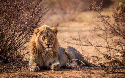 attrezzatura safari in africa