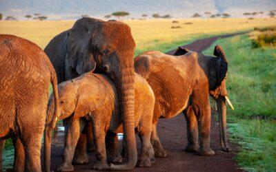 regole safari sicuro