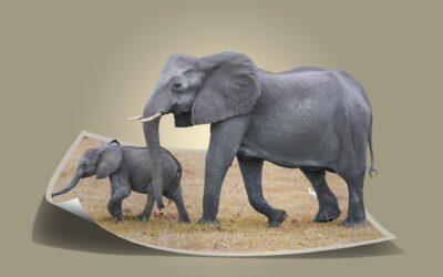 attrezzatura fotografica da safari