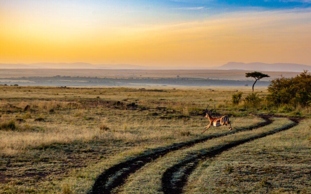 Cosa devi sapere prima di partire per un safari