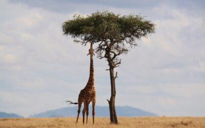 Safari: perché dovresti farlo almeno una volta