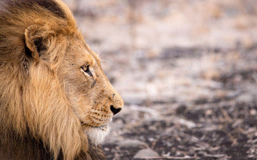Come organizzare lo zaino per il safari