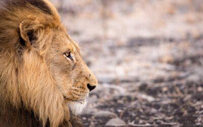 organizzare lo zaino per il safari