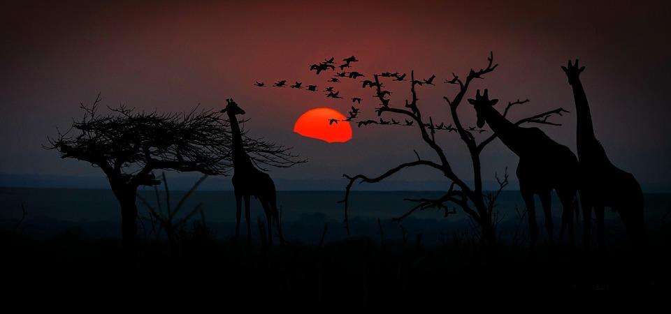 Il safari come avventura di coppia
