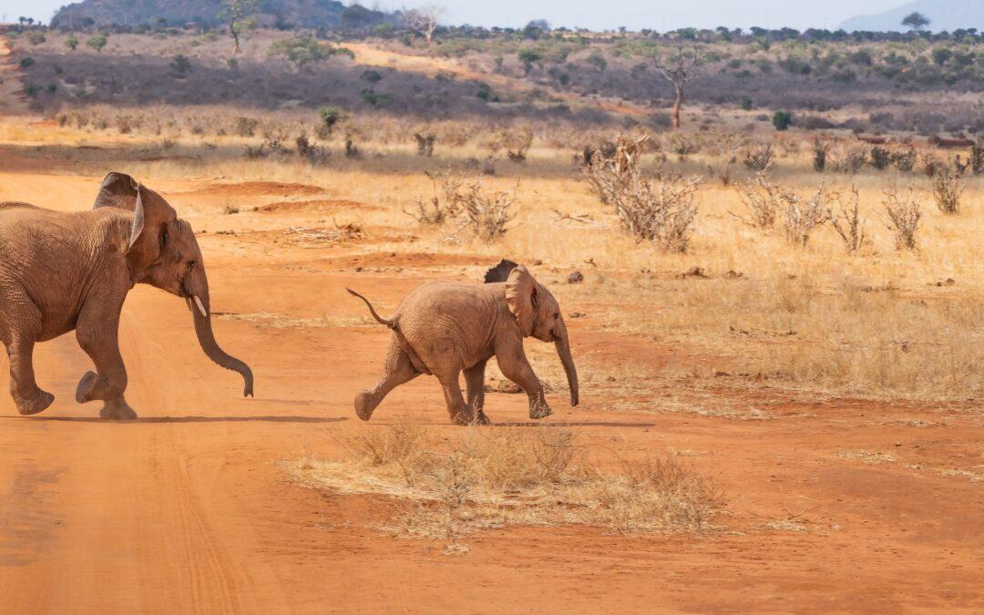 Safari per la prima volta: 5 consigli utili