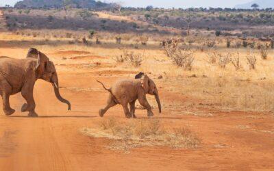 safari per la prima volta